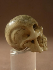 Antique Memento Mori Carved Skull.